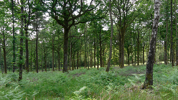 foret-ecouves