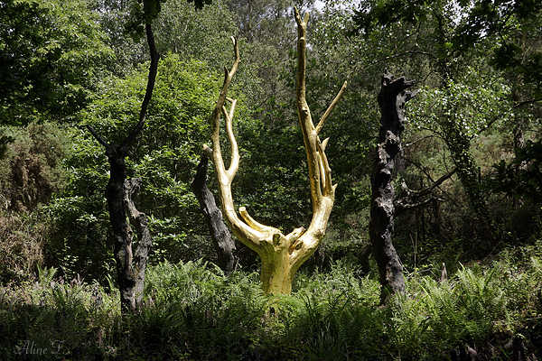 L'arbre d'or en forêt de Brocéliande